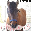 Photo de x-Pepper-x3