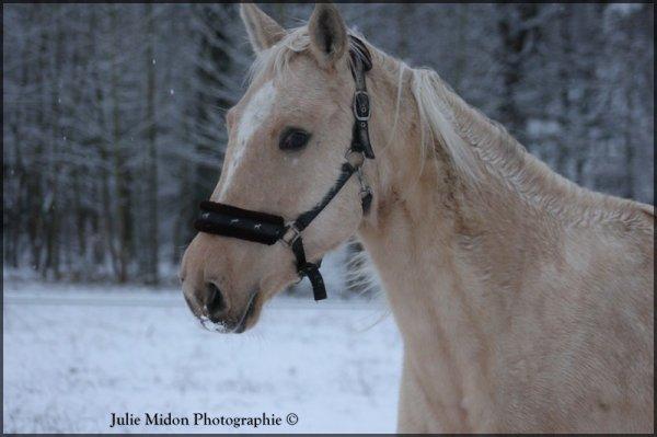 """""""La neige possède ce secret de rendre au coeur en un souffle la joie naïve que les années lui ont impitoyablement arrachée."""""""
