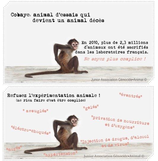 » Vivisection «     ◦ ◦ ◦ ◦ ◦ ◦ ◦ ◦ ◦ ◦ ◦ ◦ ◦ ◦ ◦ ◦ ◦ ◦ ◦ ◦ ◦ ◦ ◦ ◦ ◦ ◦ ◦ ◦ ◦ ◦ ◦ ◦ ◦ ◦ ◦ ◦ ◦ ◦ ◦ ◦ ◦ ◦ ◦ ◦ ◦ ◦ ◦ ◦ ◦ ◦ ◦ ◦ ◦ ◦ ◦ ◦ ◦ ◦ ◦   Cobaye: Animal d'essais qui devient un animal décès.