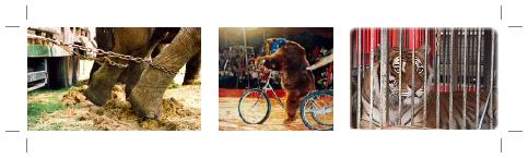 » Cirques «     ◦ ◦ ◦ ◦ ◦ ◦ ◦ ◦ ◦ ◦ ◦ ◦ ◦ ◦ ◦ ◦ ◦ ◦ ◦ ◦ ◦ ◦ ◦ ◦ ◦ ◦ ◦ ◦ ◦ ◦ ◦ ◦ ◦ ◦ ◦ ◦ ◦ ◦ ◦ ◦ ◦ ◦ ◦ ◦ ◦ ◦ ◦ ◦ ◦ ◦ ◦ ◦ ◦ ◦ ◦ ◦ ◦ ◦ ◦   Le cirque oui, mais sans Animaux !