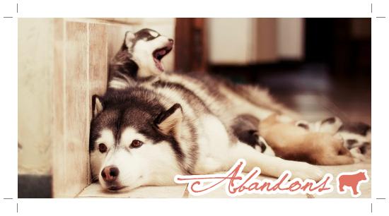 » Vacances avec son animal + Abandons«    ◦ ◦ ◦ ◦ ◦ ◦ ◦ ◦ ◦ ◦ ◦ ◦ ◦ ◦ ◦ ◦ ◦ ◦ ◦ ◦ ◦ ◦ ◦ ◦ ◦ ◦ ◦ ◦ ◦ ◦ ◦ ◦ ◦ ◦ ◦ ◦ ◦ ◦ ◦ ◦ ◦ ◦ ◦ ◦ ◦ ◦ ◦ ◦ ◦ ◦ ◦ ◦ ◦ ◦ ◦ ◦ ◦ ◦ ◦   Après son chien, c'est son âme qu'il abandonnera.