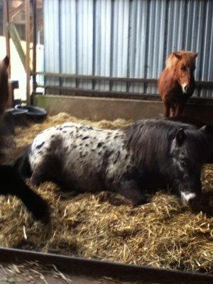3  petits poneys