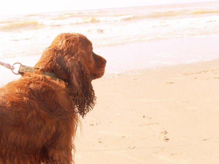 Gary a la mer