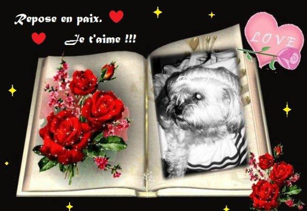 (l) #__Ophélie Mon Amour Ma Chienne__# (l)