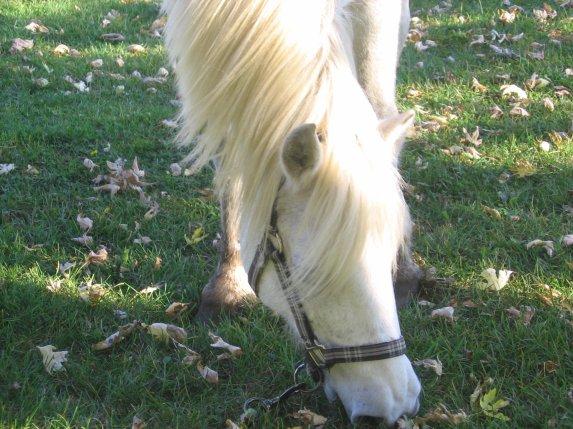 Respecter la monture du monde, parce qu'un jours, il pourrait bien dépasser votre cheval.