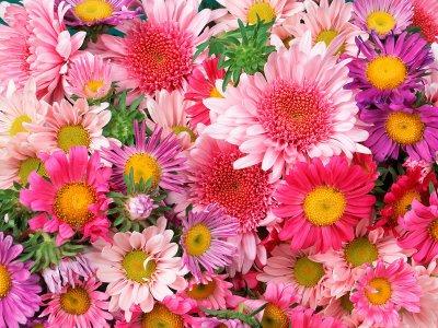 """un bouquet de fleurs pour """"bonne ame""""   ZODIACALE"""