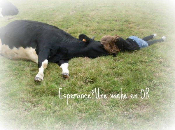 Espérance, une vache en Or..