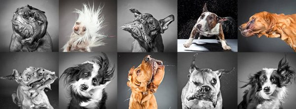 "photo faite par"" Carli Davidson Pet Photography"""