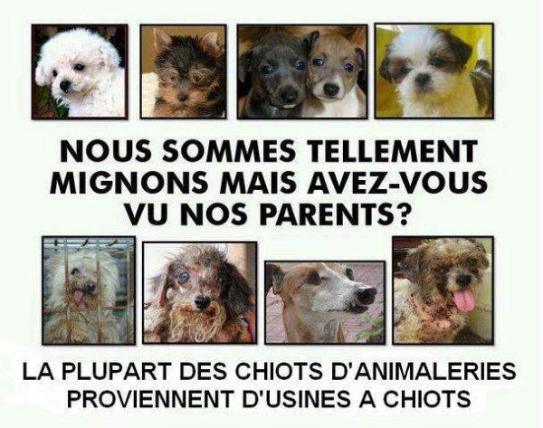 N'achetez pas en animalerie !!!!