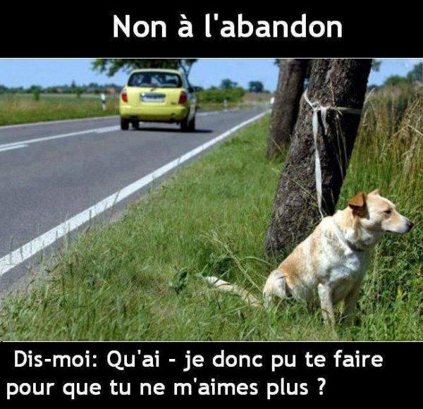 NON a L'abandon
