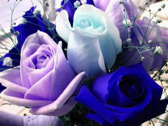 (l) ces roses pour toi cherie je t aime tres fort gros bisous mon amour (l)
