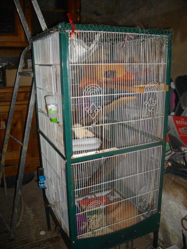 La cage des femelles