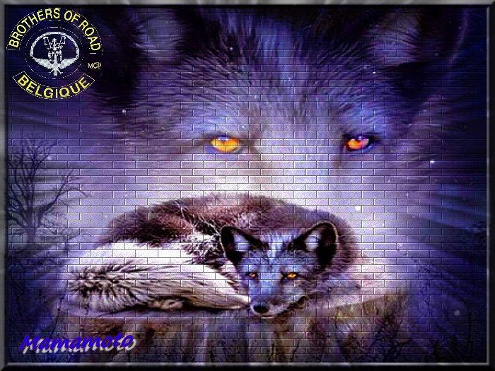 indien  loups a aigle