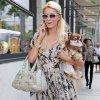 Paris Hilton veut découvrir le célibat