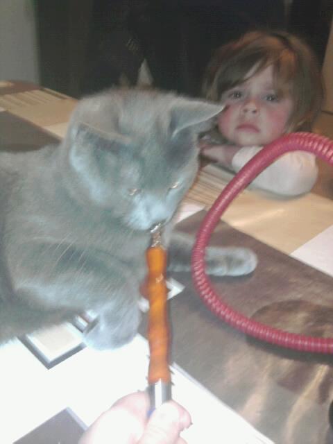mon chat fume la chicha mdr