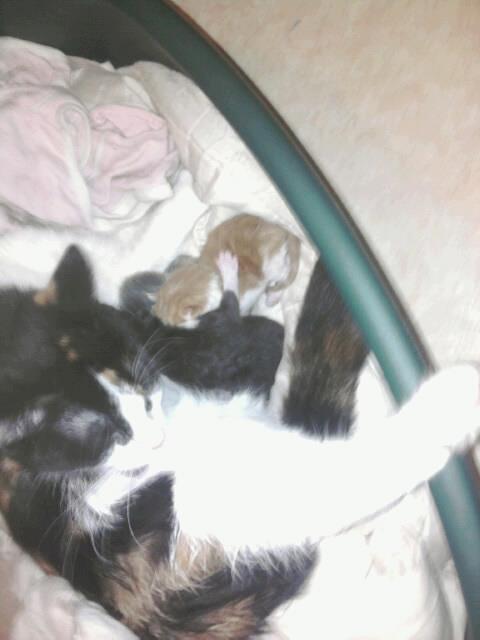 et encore mon ortre chat qui a acouche