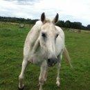 Photo de cheval-7