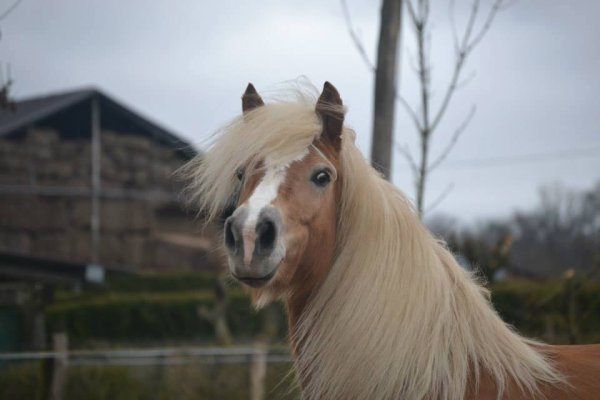 tu me rend folle , mon blond
