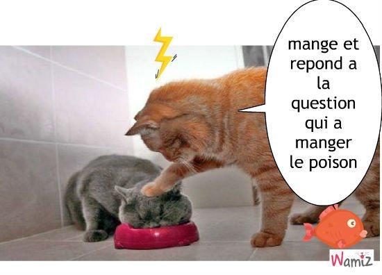 Finalement entre chat il ne sont pas si mignon :-(