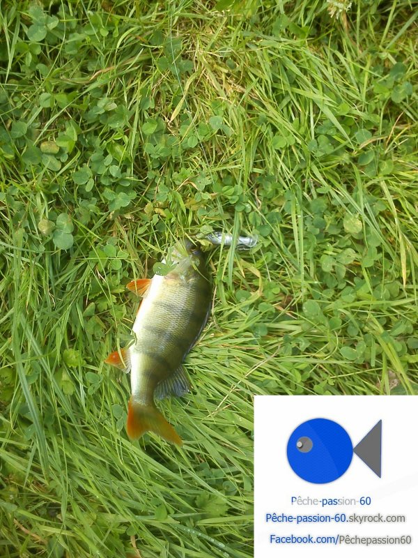 Session de 2heure : Pêche de la perche !
