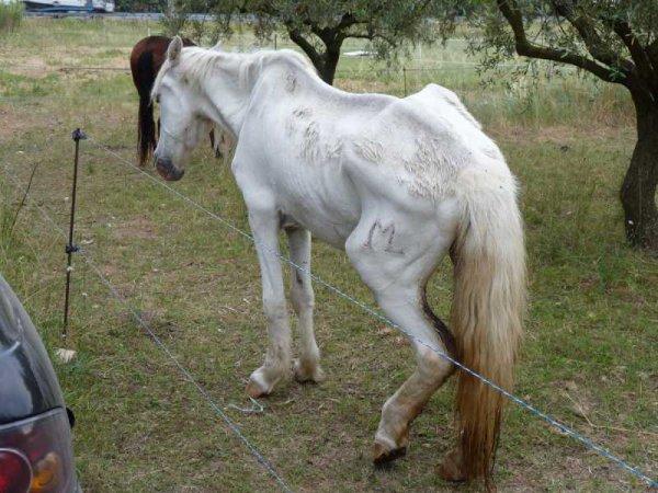 Qu es qu'un cheval en état et comment les reconnaitre