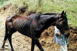 """Un cheval peut-il perdre de l'état suite à un coup """" au moral"""" ?"""
