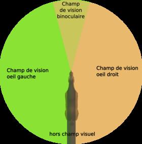 Champ visuel du cheval