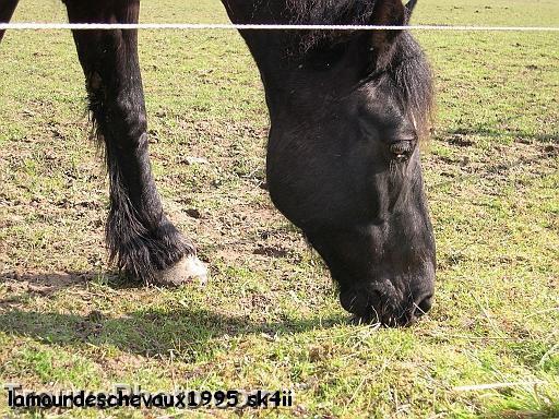 Faire vivre enssemble chevaux et oiseaux est-il dangeureux?