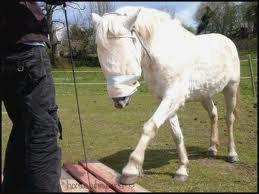 Un cheval aveugle a-t-il le sens de l'oriention???