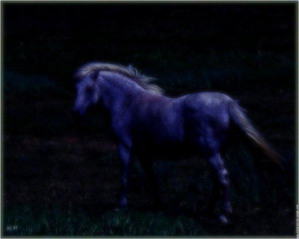 Les chevaux peuvent-ils se repérer la nuit ?