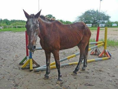 Existe-il des maisons de retraites pour chevaux?