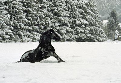 Est-ce que mon cheval peut attraper un coup de froid?