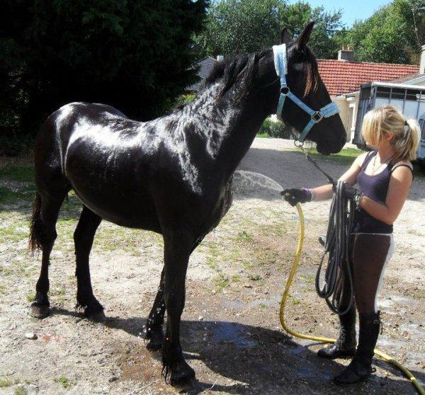 Peut-on laver son cheval tout les jours???