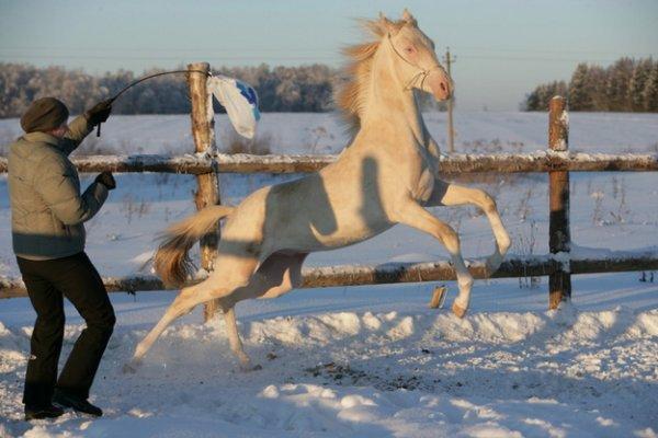 Il parait que c'est le plus beau cheval du monde!!!