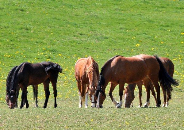 Une journée dans la vie d'un cheval