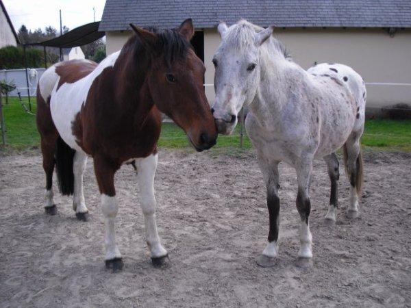 vote pour les poneys