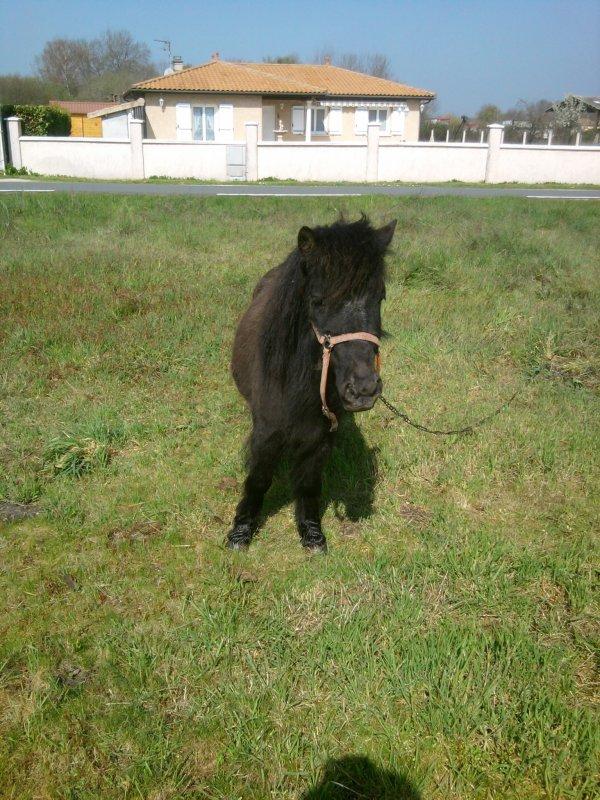 vote pour les petit poney