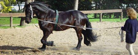 Détendre mon cheval en longe