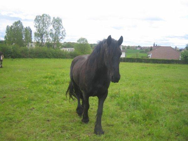 Emploie du temps d'un cheval