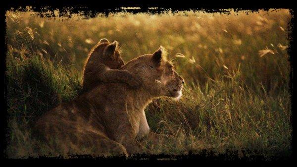 Le Royaume Animal / Les Animaux Sauvages (2ème partie)