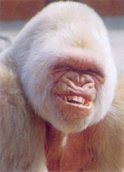 singe qui sourit