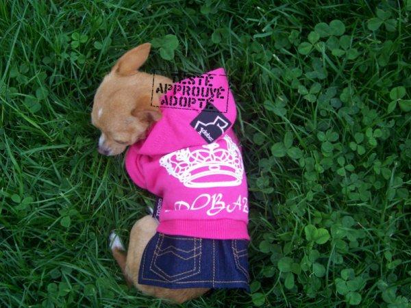 """Vêtements pour chien testés par nos top modèles, Griotte 9 mois avec sa petite robe """"Queen"""" de chez Dobaz testée pendant la sieste! :)"""