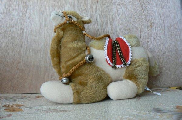 ma chamelle de tunisie