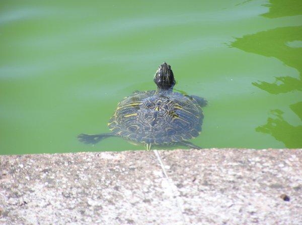 Les animaux que j'ai vu en Italie (trop top! ^^)~petit Bonus :