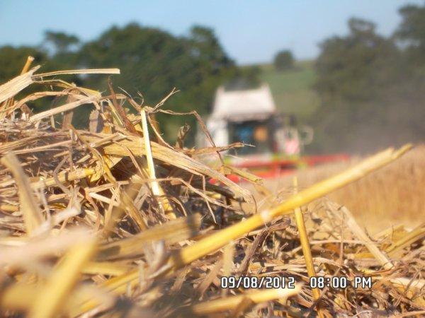 Claas lexion 570 à battre le blé
