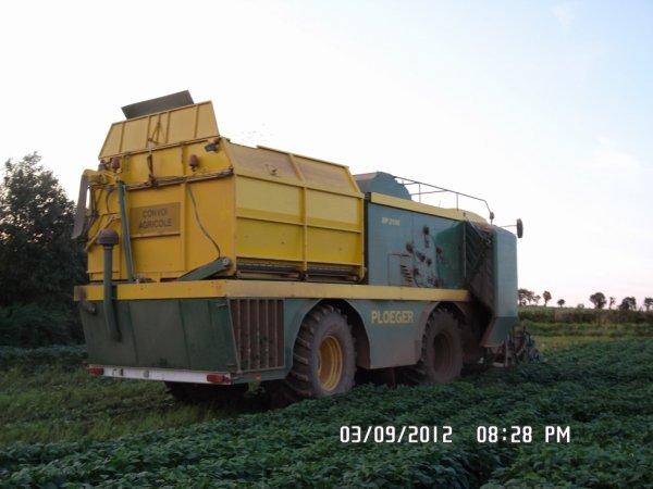 La ploeger bp 2100 à récolté les haricots.