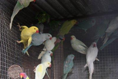 aves de 2010