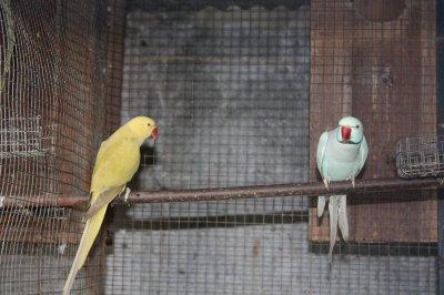 reprodutores