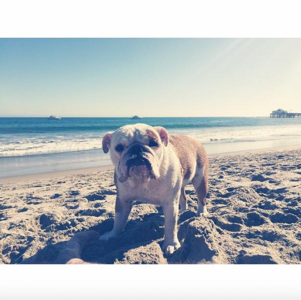 Bill instagram :  #garsdeplage #pumbi  #beachboy #pumbi
