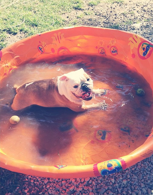 Bill instagram :   essayer de rester au frais dans la chaleur du désert #pumbi baignoire #poolside.   trying to stay cool in the desert heat #pumbi #bath #poolside 😎🐳💦🍦